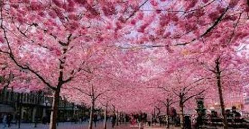 Cherry blossom.com sito di incontri Lapprendista dating annuncio